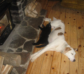 Black cat and white dog stretched out in front of a fireplace